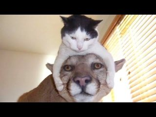 The funniest and most hilarious ANIMAL videos 1 - Funny animal compilation - Watch and laugh!