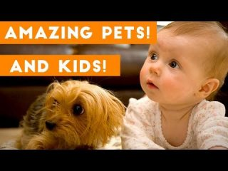 Most Amazing 1 Hour of Cute Kids And Pets